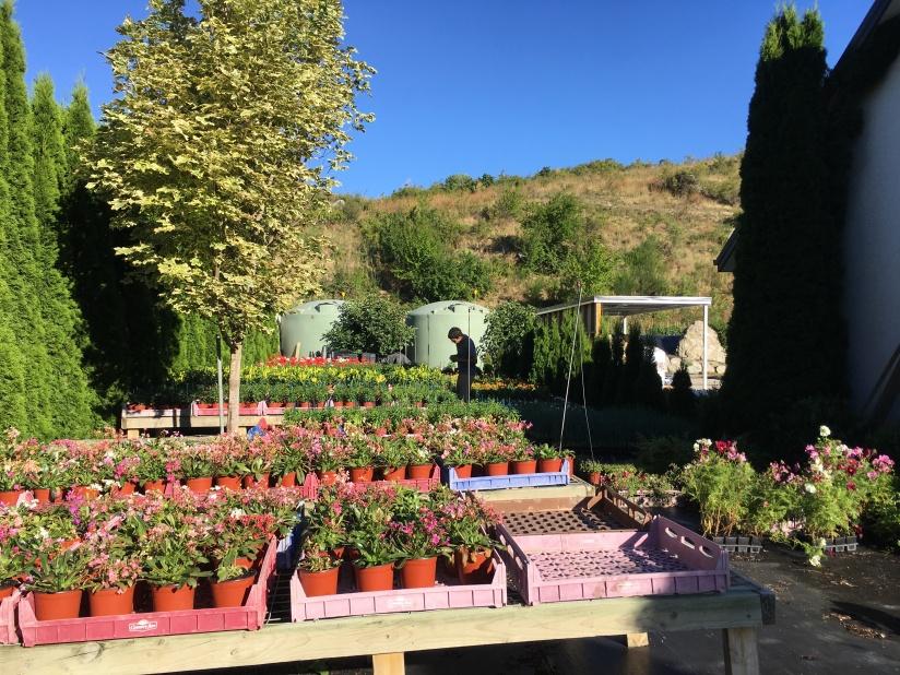New Zealand farm and nursery