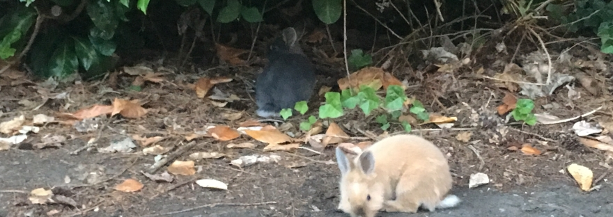 Seattle rabbits